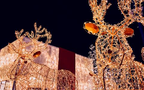 An image of two moose sculptures lit up with white holiday lights